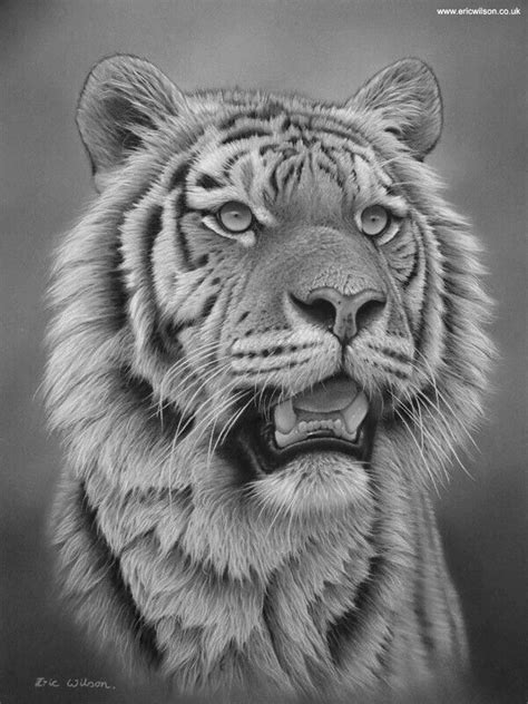Pin by Bangiz on Animals | Tiger tattoo, Tiger drawing, Animal drawings