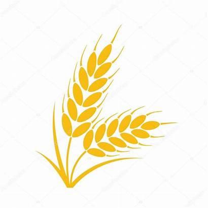 Wheat Grain Icon Whole Rye Ears Grains
