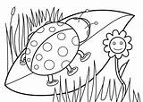 Coloring Pages Lady Ladybug Bug sketch template