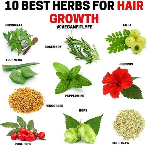 Herbs For Hair Growth👇 💚 Tag Someone Who Needs To See