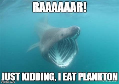 Meme Shark - what can the funniest shark memes on the internetz teach us about ocean science and conservation