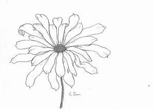 eleletsitz: Transparent Flower Drawing Tumblr Images
