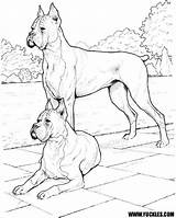 Boxer Coloring Dog Dogs Realistic Puppy Doberman Pinscher Colouring Yuckles Sheets Printable Getcolorings Designlooter Police Drawings Labradors Shirts Library Animals sketch template