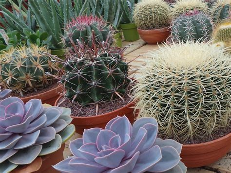 Plants that live off air alone! - Buy trees, shrubs ...