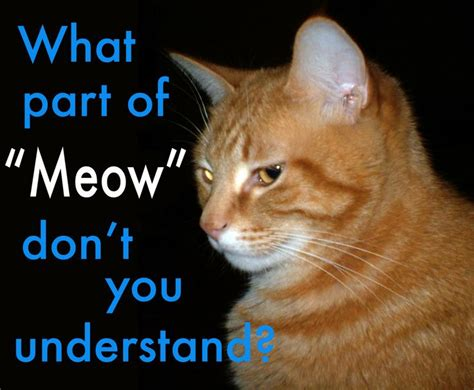 Meow Meme - 28 best ideas about cats on pinterest funny cat pictures tech news and kittens