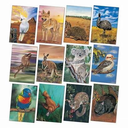 Poster Animals Australian Kit