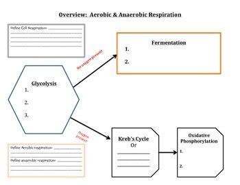 graphic organizer cell respiration aerobic anaerobic