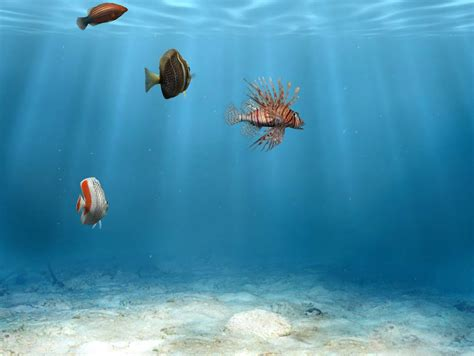 m駭age dans les bureaux poissons fond d 39 cran gratuit