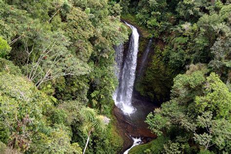 amazonia si鑒e social foresta amazzonica salvare la biodiversità e ridurre la deforestazione autori fanpage