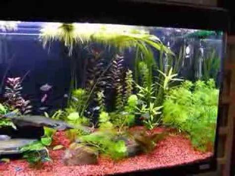 fluval roma 200 litre aquarium 29th january 2014