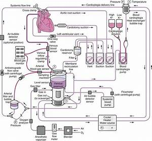 Cardiopulmonary Bypass And Management