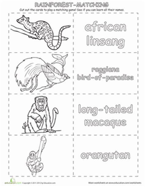 rainforest animals worksheet education