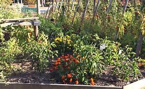 Plantes Amies Et Ennemies Au Potager : semer des fleurs l action r pulsive le compagnonnage ~ Melissatoandfro.com Idées de Décoration