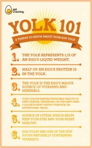 Egg nutrition | Egg Calories | Nutritional content of Eggs