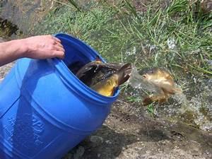 Karpfen Im Gartenteich : goldfische im teich great hilfe im teich with goldfische ~ Lizthompson.info Haus und Dekorationen