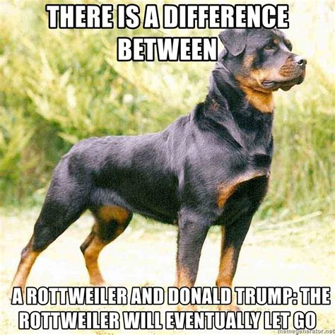 Rottweiler Memes - there is a difference between a rottweiler and donald trump the rottweiler will eventually let