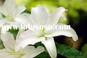 Names Of Diffe Types Of White Flowers - 4k Wallpapers
