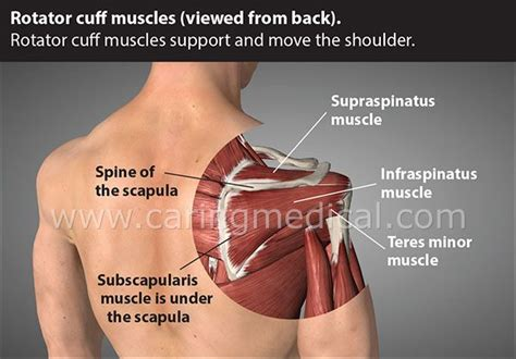 18 Best Shoulder Injuries And Instability Treatment