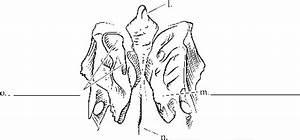 Sphenoid Temporal Amd Ethmoid Bones