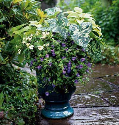 Shade Flowers Container Garden