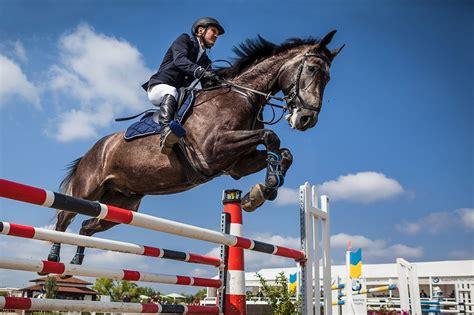 kostenloses foto pferd fahrer springreiten kostenloses bild auf pixabay