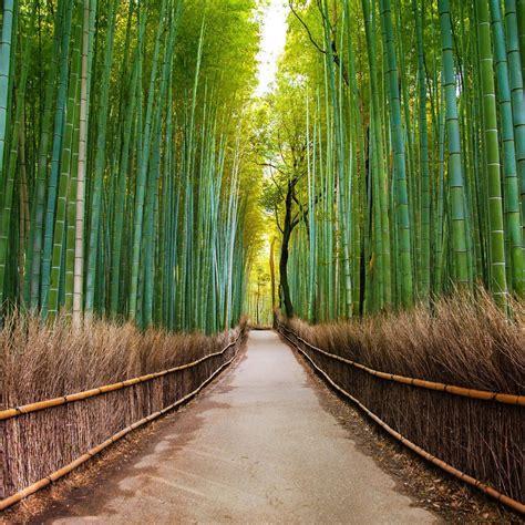 sejuknya hati  jalan setapak hutan bambu sagano mister