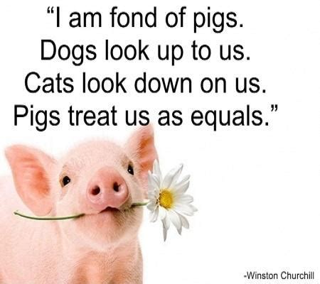 funny pig poems