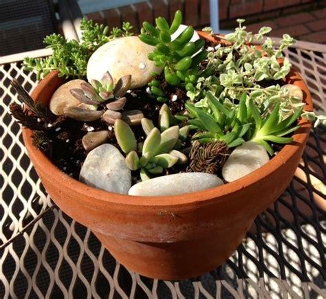 succulent pot ideas succulent pot ideas succulents in the garden pinterest