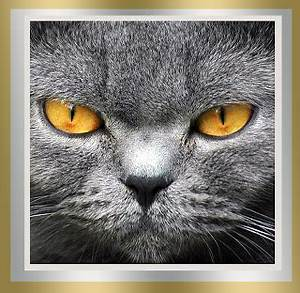 Light Grey Kitten Mary 39 S Be A Gooddog Blog Snow Cats And Sweetest Fridays