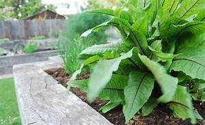 Paprika Pflanzen Abstand : 10 schlaue sommergarten tipps ~ Whattoseeinmadrid.com Haus und Dekorationen