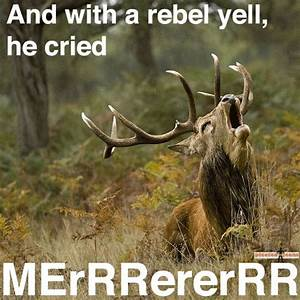 Elk Hunting Fun... Elk Animal Quotes