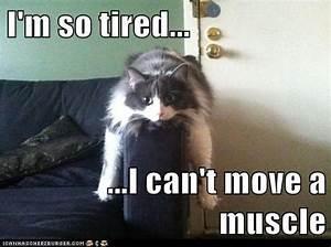 Image Gallery hungry sleepy meme