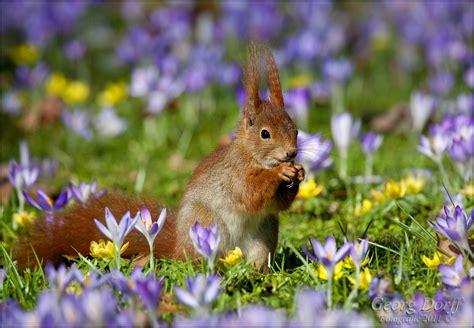 vorfreude auf den fruehling forum fuer naturfotografen