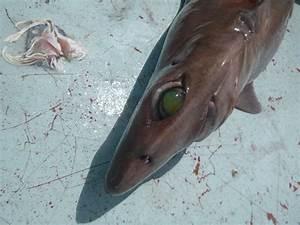 Venice Louisiana Fishing Round 2 | Giant Yellowfin Tuna ...