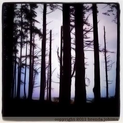 forest silhouette brenda johima vancouver island