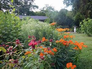 A biodiversity garden is a native plant garden is a for Garden plant design