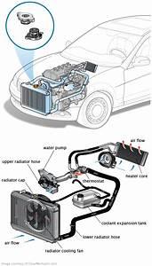 2004 Ford Focus Engine Coolant Diagram