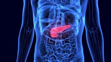 dove  trova il pancreas posizione del pancreas