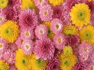 flowers for flower lovers.: Flowers wallpapers HD desktop ...