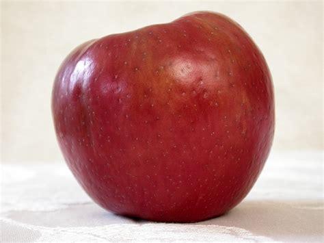 chambre d hote cannes eplucher une pomme avec style buzz gastronomie et alimentation