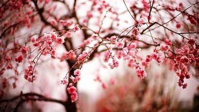 Blossom Cherry Tree Walops Attachment