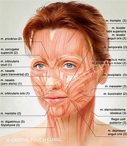 Facial Muscles Eyes - Google Search