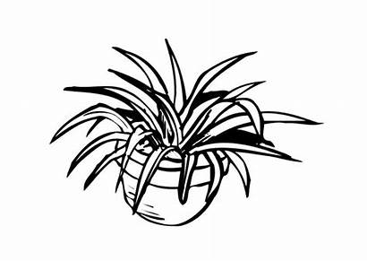 Coloring Houseplant Plant Drawing Pages Getdrawings