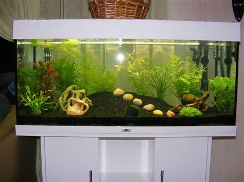 aquarium juwel 180 litres projet aquarium juwel 180 litres de natibou
