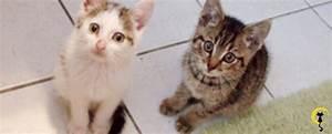 Mit Katze Umziehen : katzenfreunde schweiz ~ Michelbontemps.com Haus und Dekorationen