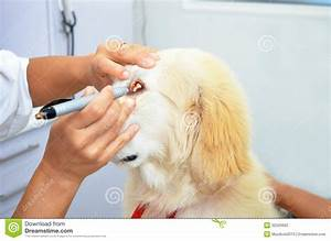 Veterinarians At Work With Cute Animals