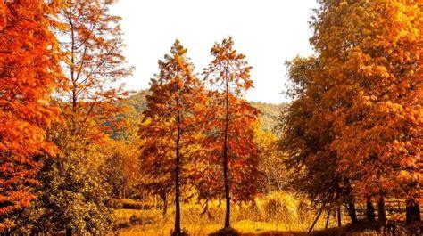 Paisaje natural en colores cálidos Foto Gratis