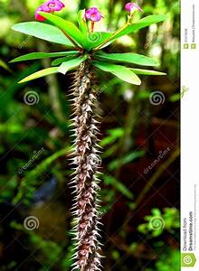 A, Cactus, Plant, With, A, Twisted, Stem, Royalty, Free, Stock