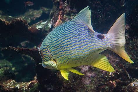 cours de cuisine boulogne sur mer 25 best ideas about nausicaa aquarium on