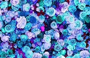 blue, blue flowers, flower, flowers, pink, pink flowers ...